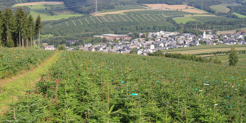 pflanzen-gockel-home-xs-002